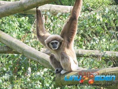 Ubuntu版本代号赏析-Mark Shuttleworth的动物乐园