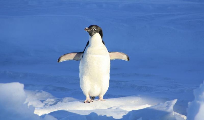 Linux 基金会发布 2017 最佳 Linux 发行名单