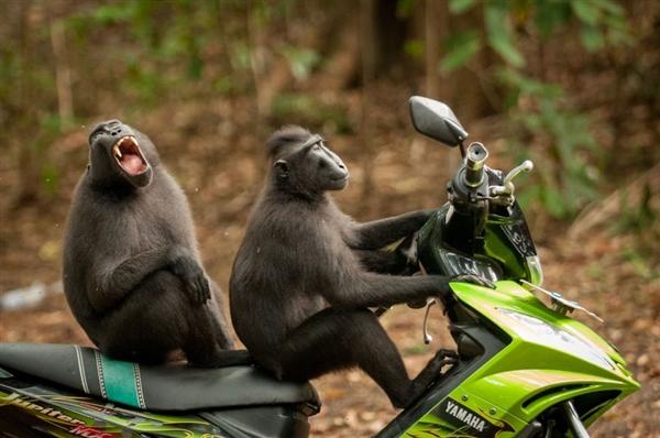 2017年搞笑野生动物摄影大赛结果出炉 这届冠军我服!