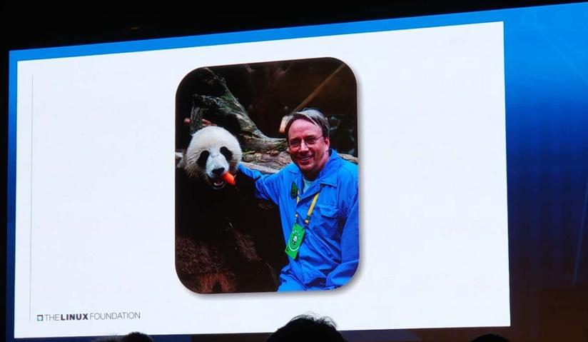 图片中的大熊猫看起来很开心,但是似乎是因为那根胡萝卜,而不是因为它旁边是 Linus