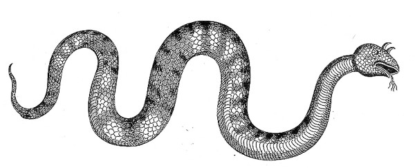 Serpent with horns